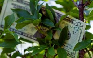 Привлечение денег с помощью дерева по фен-шуй