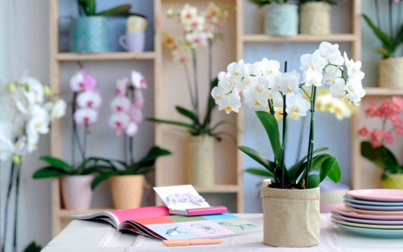 Как подобрать комнатные цветы по фен-шуй