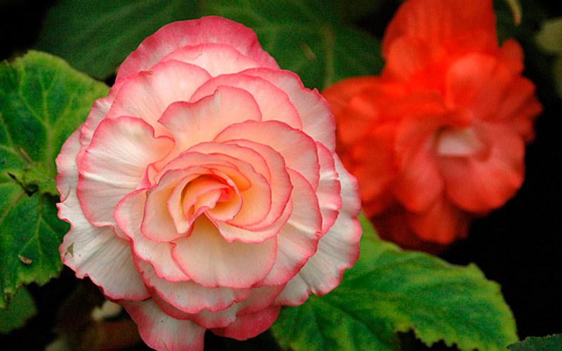 Искусственные цветы по фен-шуй в квартире