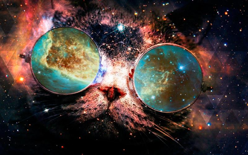 обои на рабочий стол космос коты № 2288007 загрузить